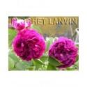 Rosa 'Le Rosier Evêque' - Rosaceae - Rosier