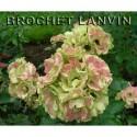 Rosa 'Greenleeves' - Rosaceae - rosier