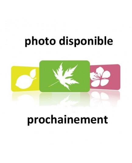 Crataegus persimilis 'Splendens' - Aubépine