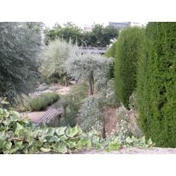 Autres arbustes calcicoles
